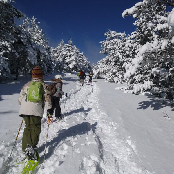 Une randonnée raquettes aux pieds avec Aigoual Pleine Nature